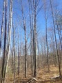 Woodlot W/River View & Frontage